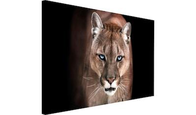 Reinders! Wandbild »Puma« kaufen