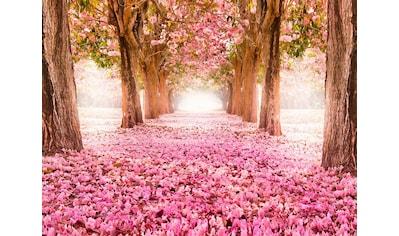 Art for the home Leinwandbild »Wald in Rosa Blüten« kaufen