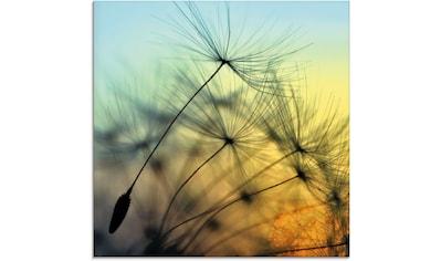 Artland Glasbild »Goldener Sonnenuntergang und Pusteblumen« kaufen