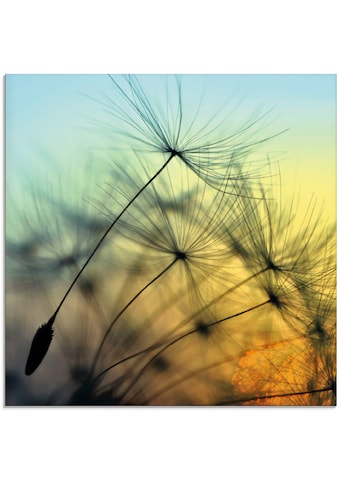 Artland Glasbild »Goldener Sonnenuntergang und Pusteblumen«, Blumen, (1 St.) kaufen