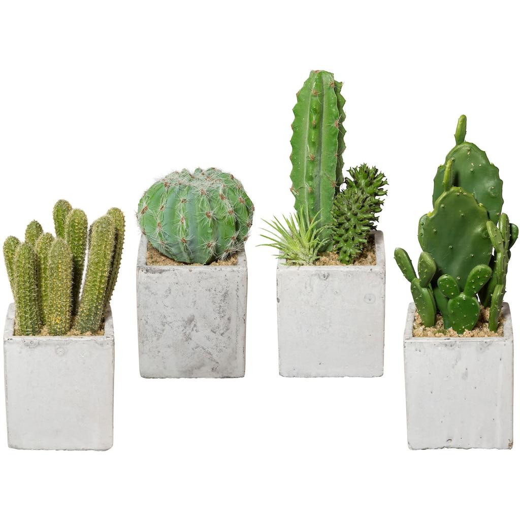 Creativ green Kunstkaktus »Kaktus«, 4er Set, im Zementtopf