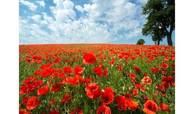 Papermoon Fototapete »Red Poppy Field« kaufen