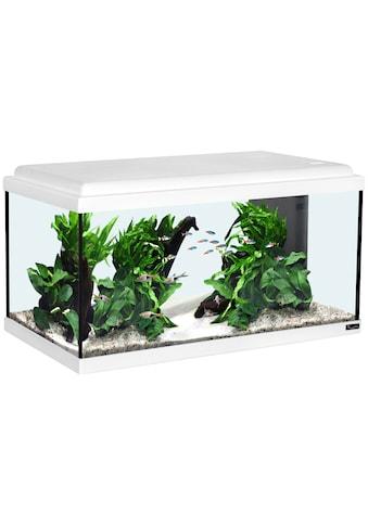 Aquatlantis Aquarium »Advance 60 LED«, BxTxH: 60x30x34 cm, 54 l kaufen