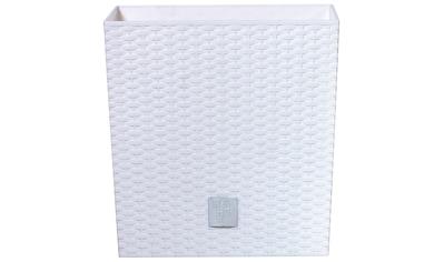 Prosperplast Blumentopf »Rato low«, BxTxH: 40x40x40,8 cm kaufen
