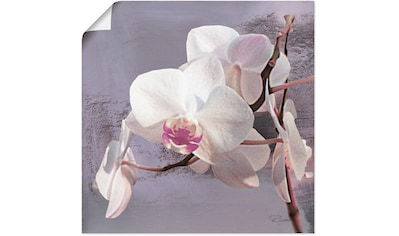 Artland Wandbild »Orchideen vor Violett I«, Blumen, (1 St.), in vielen Größen & Produktarten - Alubild / Outdoorbild für den Außenbereich, Leinwandbild, Poster, Wandaufkleber / Wandtattoo auch für Badezimmer geeignet kaufen