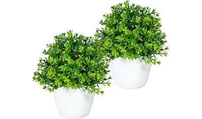 Home affaire Künstliche Zimmerpflanze »Moulins«, 2er Set kaufen