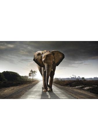 Reinders! Wandbild »Elefant König« kaufen