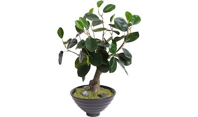 Botanic-Haus Kunstbonsai »Bonsai« kaufen