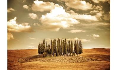 Papermoon Fototapete »Herbst Vintage Bäume«, Vliestapete, hochwertiger Digitaldruck kaufen