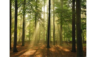PAPERMOON Fototapete »Forest in the Morning«, Vlies, in verschiedenen Größen kaufen