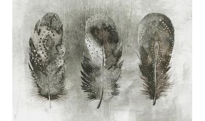 ARCHITECTS PAPER Fototapete »Atelier 47 Motley Feather 1«, Federn kaufen