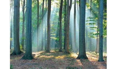 Reinders! Deco-Panel »Wald im Sonnenlicht«, 140/100 cm kaufen