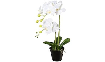 Creativ green Kunstpflanze »Orchidee Phalaenopsis« kaufen