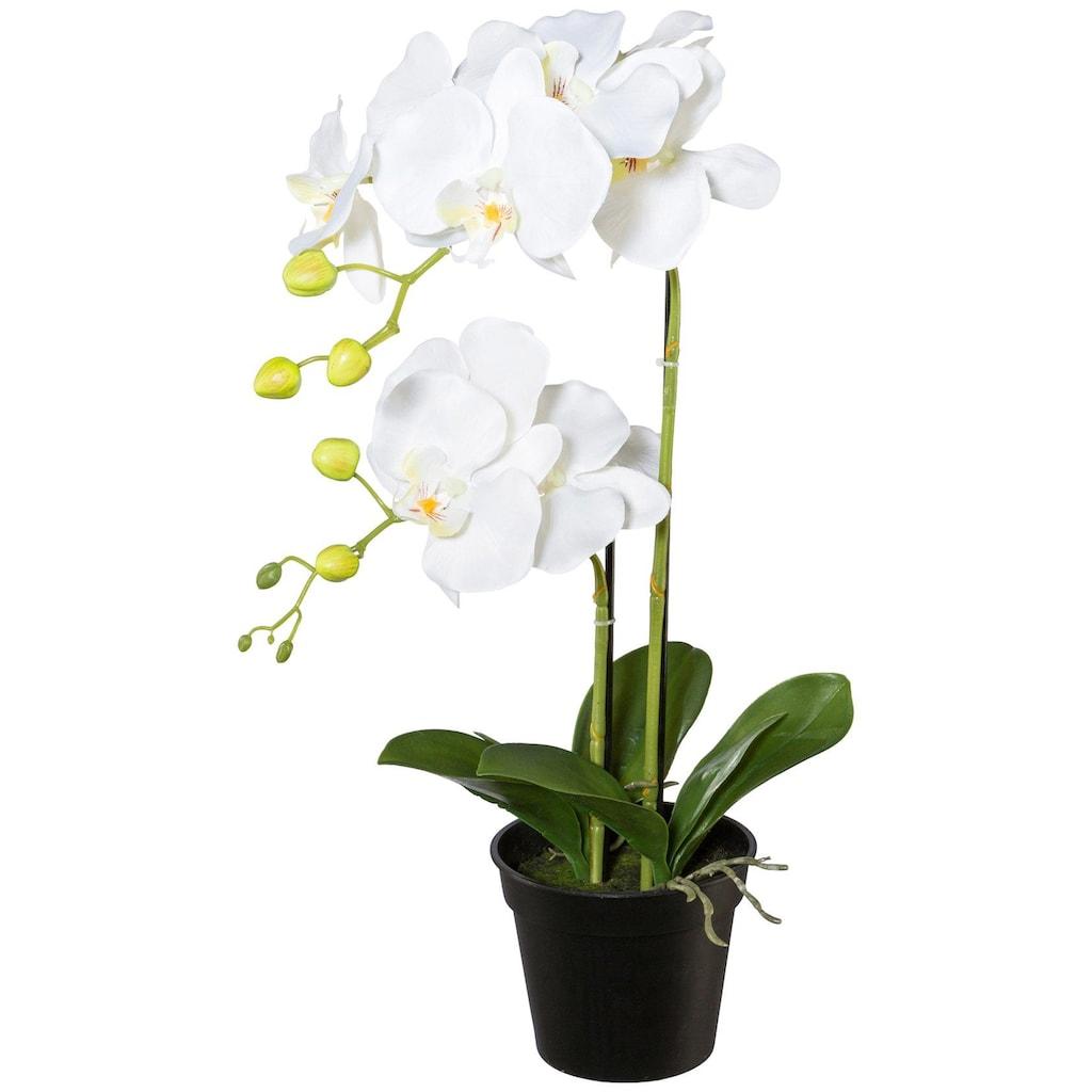 Creativ green Kunstpflanze »Orchidee Phalaenopsis«