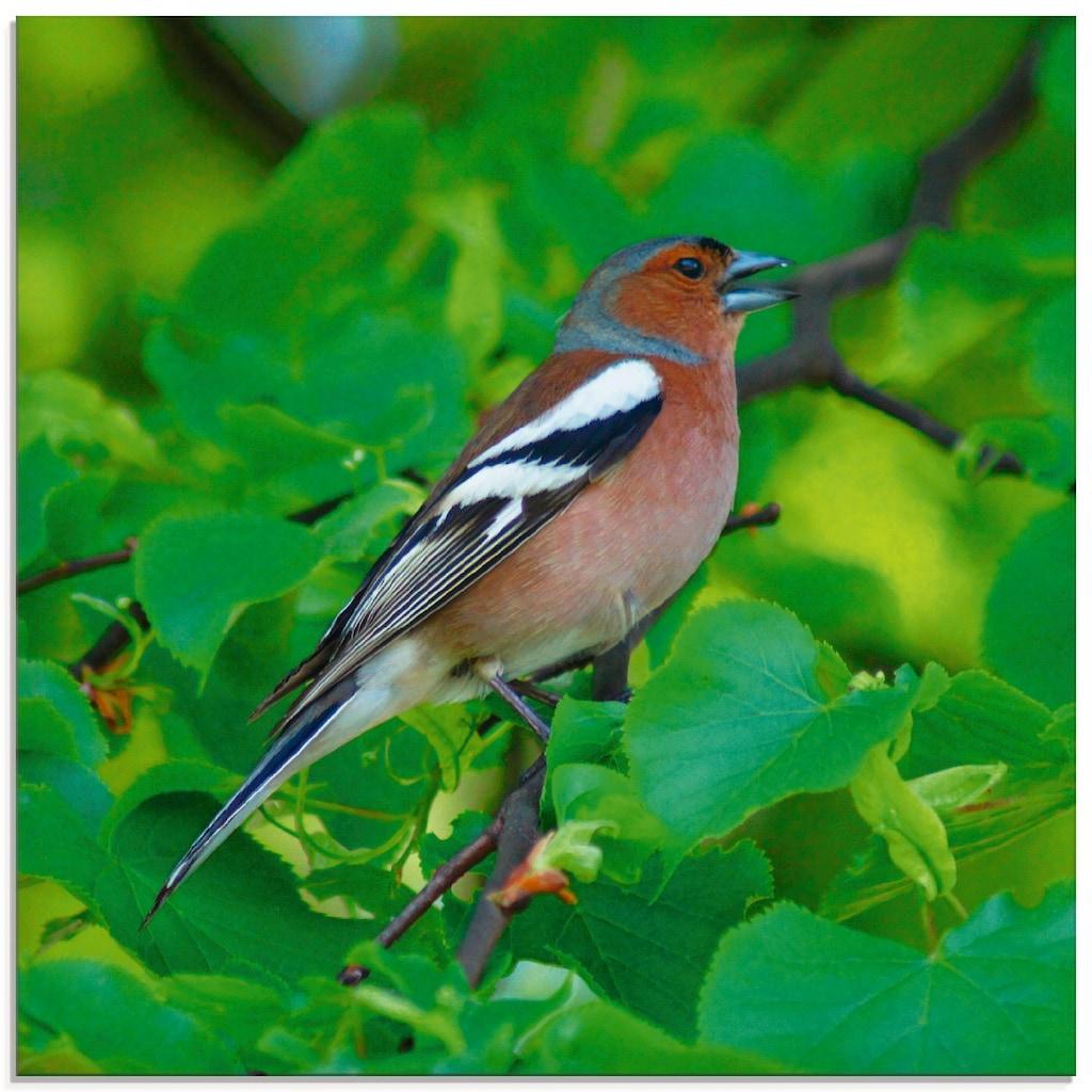 Artland Glasbild »Buchfink Lied«, Vögel, (1 St.)