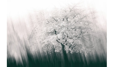 Architects Paper Fototapete »Streaks Spring«, Winter Wald, Vlies, glatt kaufen