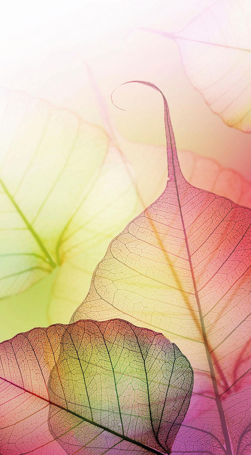 Fototapete Pink Design bunt Fototapeten Tapeten Bauen Renovieren