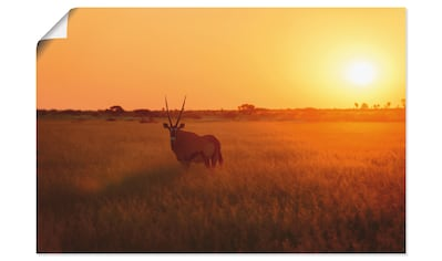 Artland Wandbild »Oryxantilope im Sonnenaufgang«, Wildtiere, (1 St.), in vielen Größen... kaufen