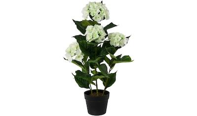 Creativ green Kunstpflanze »Hortensie«, im Kunststofftopf kaufen