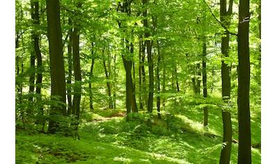 PAPERMOON Fototapete »German Beech Forest«, Vlies, in verschiedenen Größen kaufen