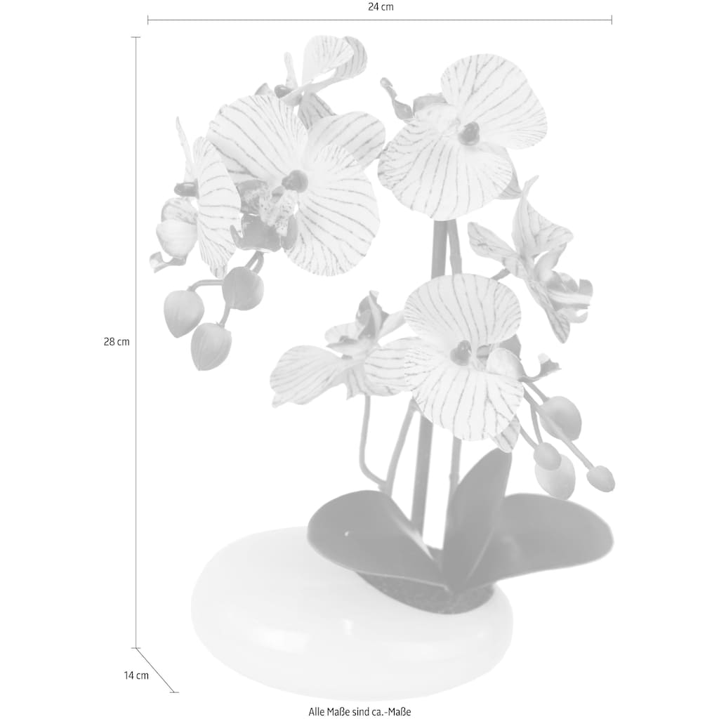 I.GE.A. Kunstpflanze »Phalaenopsis in Schale«