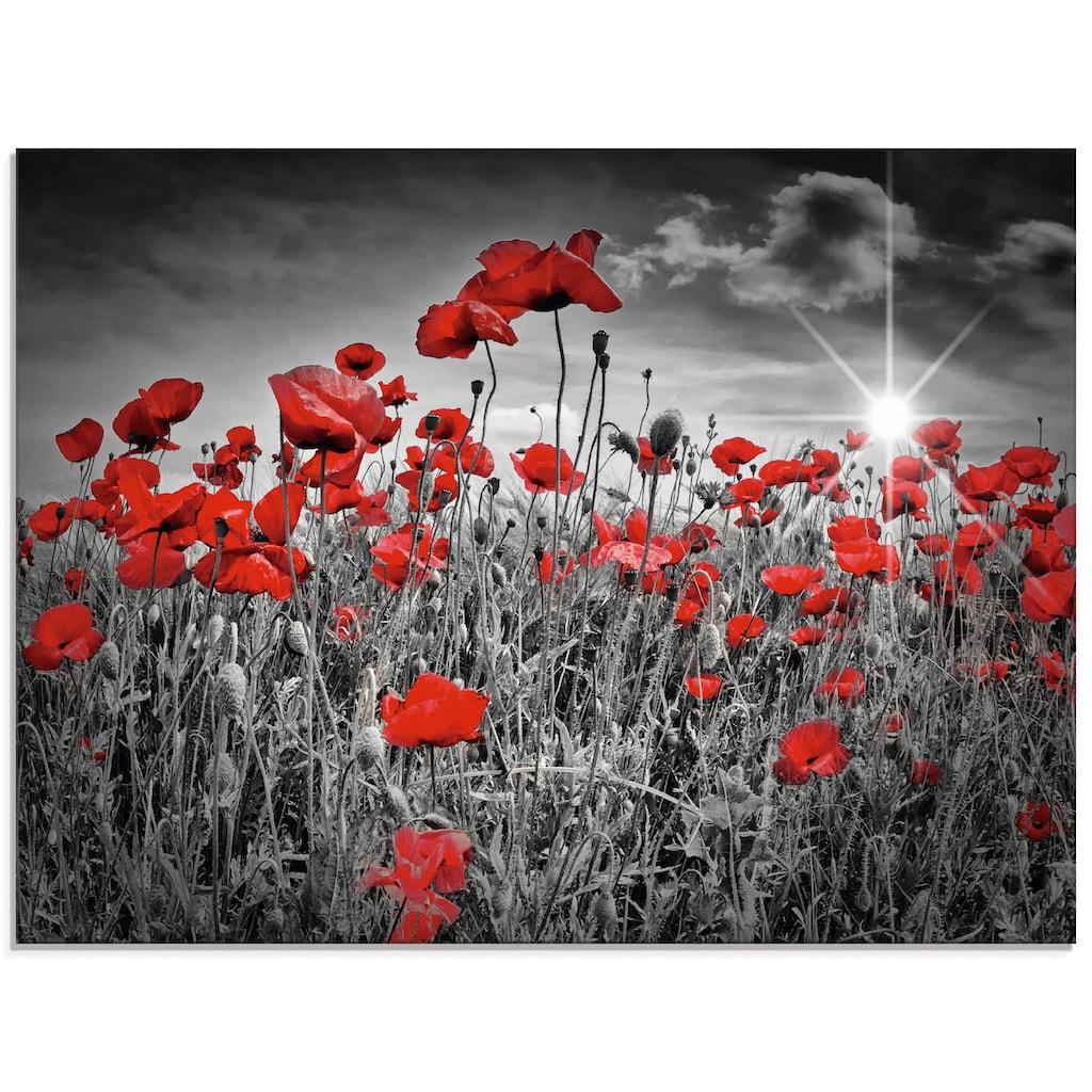Artland Glasbild »Idyllisches Mohnblumenfeld«, Blumen, (1 St.)