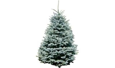 """Weihnachtsbaum Guru Echter Weihnachtsbaum """"Edeltanne"""", Edeltanne kaufen"""