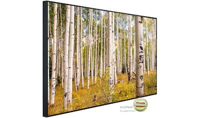 Papermoon Infrarotheizung »Birken in Colorado Rocky Mountains«, sehr angenehme... kaufen