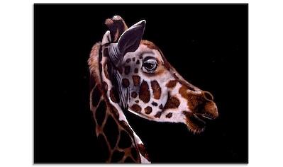 Artland Glasbild »Giraffen Portrait«, Wildtiere, (1 St.) kaufen