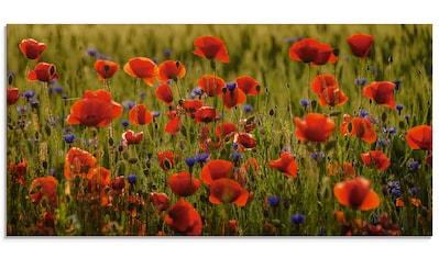 Artland Glasbild »Sommermohn«, Blumen, (1 St.) kaufen