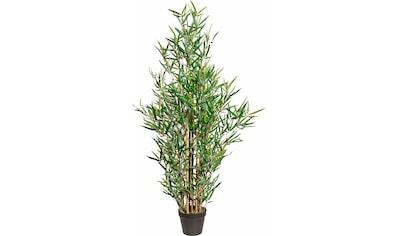 Creativ green Kunstpflanze kaufen