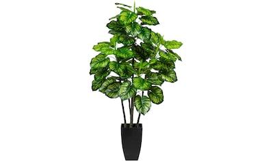 Creativ green Künstliche Zimmerpflanze »Maranta« kaufen