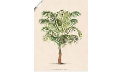 Artland Wandbild »Palme II«, Pflanzen, (1 St.), in vielen Größen & Produktarten -... kaufen
