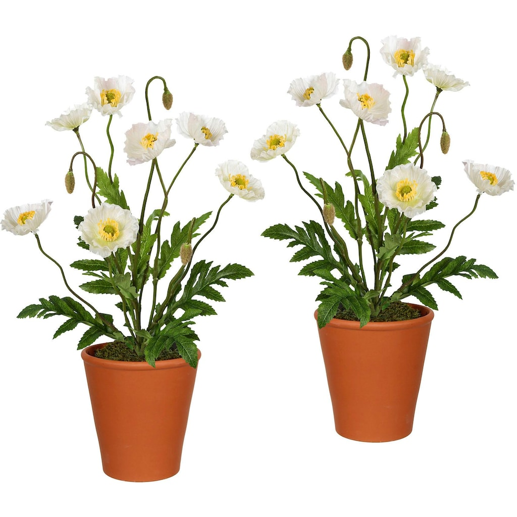 Creativ green Künstliche Zimmerpflanze, im Tontopf (2er Set)