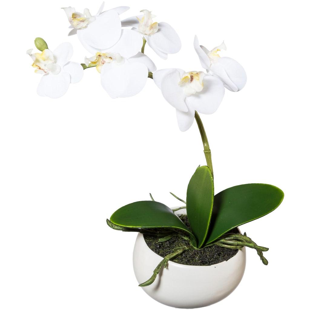 Creativ green Kunstorchidee »Phalaenopsis«, 2er Set, in Keramikschale
