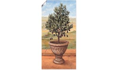Artland Wandbild »Olivenbaum«, Pflanzen, (1 St.), in vielen Größen & Produktarten -... kaufen