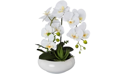 Creativ green Kunstorchidee »Phalaenopsis«, in Keramikschale kaufen