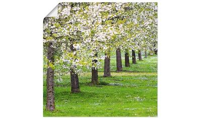 Artland Wandbild »Blütenmeer«, Bäume, (1 St.), in vielen Größen & Produktarten -... kaufen