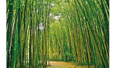 PAPERMOON Fototapete »Bamboo Forest«, Vlies, in verschiedenen Größen kaufen