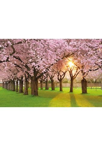PAPERMOON Fototapete »Cherry Tree Garden«, Vlies, in verschiedenen Größen kaufen