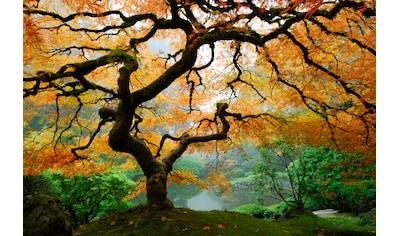 Papermoon Fototapete »Autumn Maple Tree« kaufen