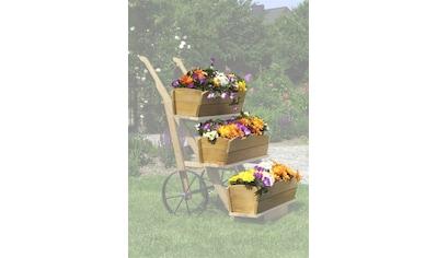 PROMADINO Set: Blumenkasten , 3 Stk., honigbraun, BxTxH: je 68x24x17 cm kaufen