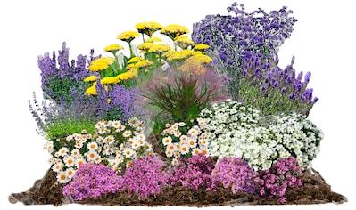 BCM Pflanzenset »Pflegeleicht«, 18 Pflanzen kaufen