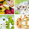 Home affaire Leinwandbild »Meer von Orchideen« (Set)