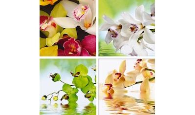 Home affaire Leinwandbild »Meer von Orchideen« (Set) kaufen