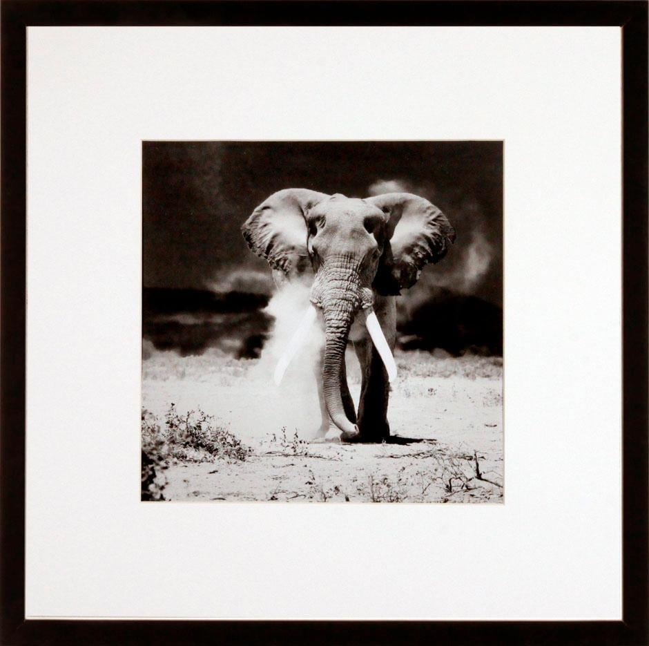 G&C Bild »ELEPHANT«