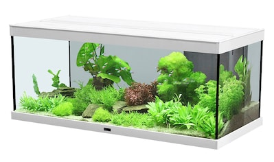 AQUATLANTIS Set: Aquarium »Style 100 LED 2.0«, 124 Liter, BxTxH: 100x40x40 cm, in versch. Farben kaufen