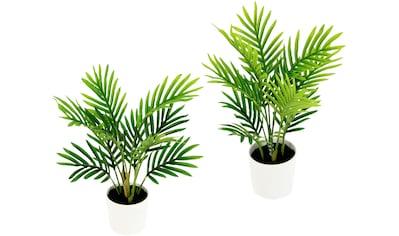 I.GE.A. Kunstpflanze »Arecapalme«, Mit Kunsterde, 2er Set kaufen