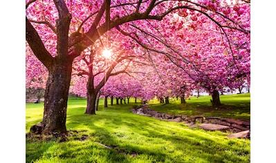 Papermoon Fototapete »Cherry Tree Blossom« kaufen
