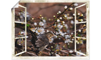 Artland Wandbild »Fensterblick  -  Kirschblüten mit Amsel« kaufen